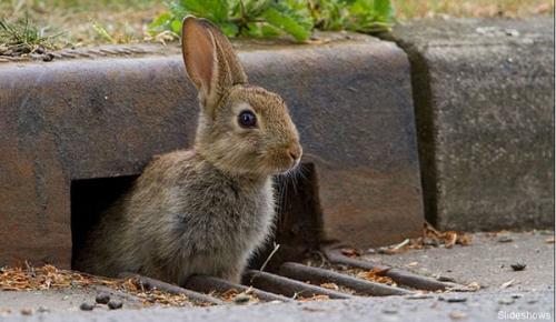 摄影师抓拍到聪慧小动物怎样过马路(组图)
