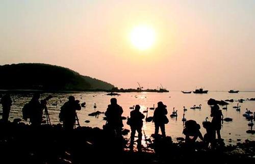 >> 山东要闻 >> 正文   11月22日,威海荣成俚岛镇,天鹅湖