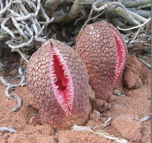 世界上16种最奇特的植物