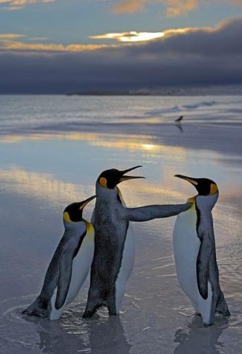企鹅托儿所