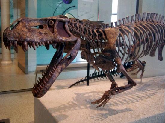 迅猛鳄两亿年前称霸地球