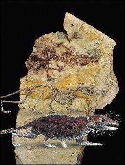 """辽宁出土人类""""曾祖母""""化石 距今1.6亿年"""