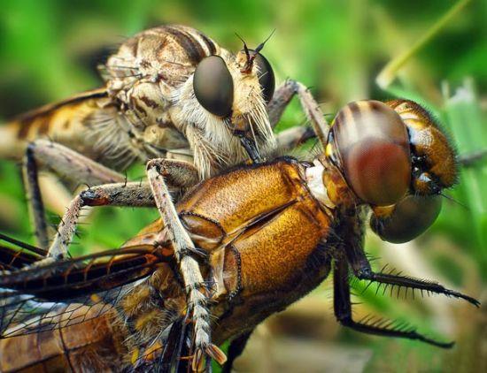 食虫虻与蜻蜓