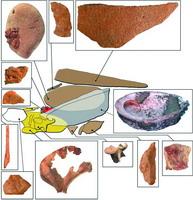 人类10万年前已具基本化学知识