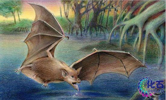 非洲发现三千万年前的巨大蝙蝠体长数米