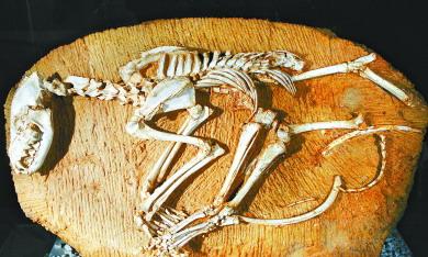 甘肃和政近日复原不知名鸟类罕见化石