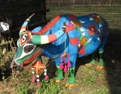 哈尼族民俗之牛体彩绘