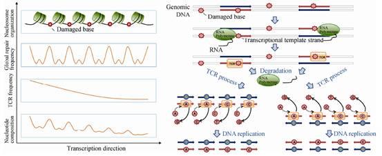 基因组所人类基因组突变研究获进展