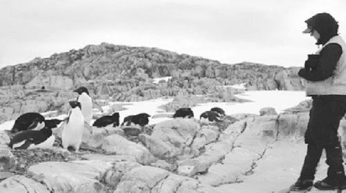 多项信号显示南极环境堪忧 折射全球气候危机