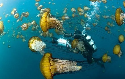一名摄影师正对水母群进行拍摄