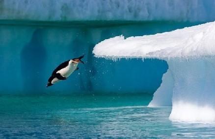 冲水的企鹅