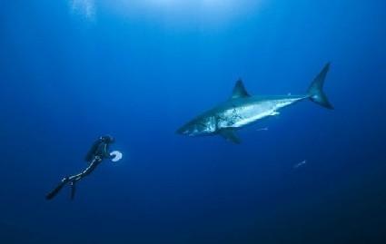 与鱼类和海豚共同畅游海洋