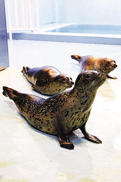 内地大鲵斑海豹落户香港海洋公园