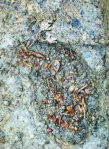 河南濮阳发现一处晚商时期文化遗址
