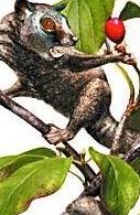 生物化石显示最早灵长类动物样貌