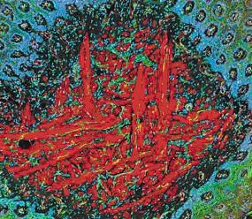 揭秘显微镜下的美丽细胞