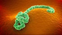 埃博拉病毒的致命性在于长达三周的潜伏期