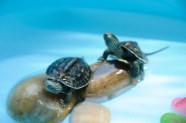 欣赏龟图片