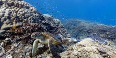 """谷歌街景扩展""""疆域"""" 用户可观赏海底珊瑚礁(图)"""