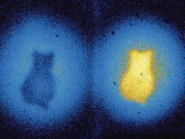 """物理学家首次利用""""薛定谔的猫""""原理拍摄照片"""