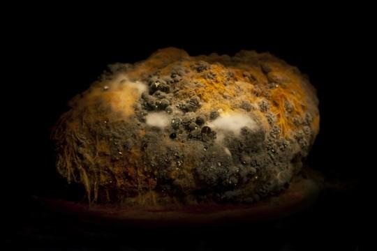 霉菌的微观小世界