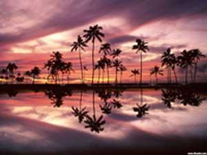 美丽的夏威夷