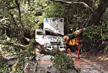 港百年病树倒塌压死人 因虫蛀菌侵树干八成腐烂