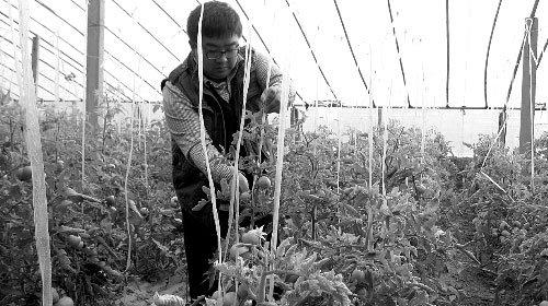 昔日文科状元从京辞职回家种菜 一年成千万富翁