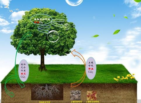二氧化碳的呼吸过程(包括土壤