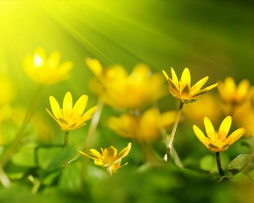 美文欣赏 聆听花开的幸福